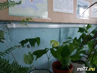 наблюдение за опытом по выращиванию фасоли