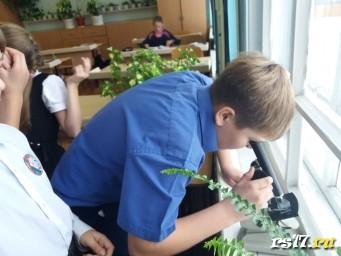 """Юные исследователи. Практическая работа """"Приготовление микропрепарата кожицы чешуи лука"""" по биологии в 5а классе."""